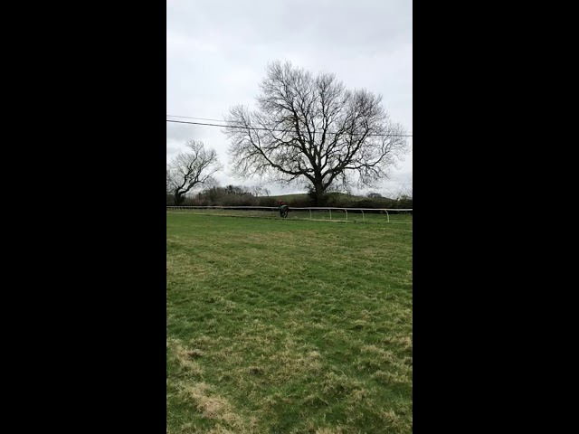 2019 04 01 HEARTSTRING on the gallops