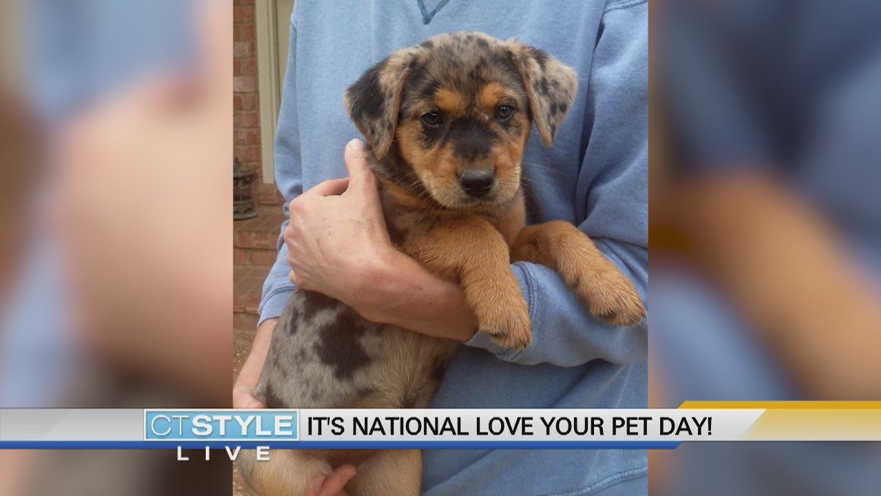 Connecticut's pets on National Love Your Pet Day 2020