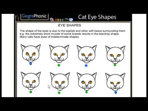 Cat Eye Shapes, Exercise For Vets, Recognize Your Pet