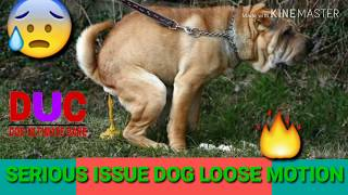 Serious Issue Dog Loose Motion😢 !! Full Treatment In Hindi  !! Dog Ultimate Care