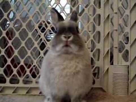 "The REAL ""Energizer Bunny"" - YouTube"
