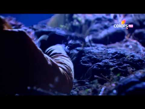 Uttaran - उतरन - बेवफ़ाई की सुगबुगाहट - 16th Jan 2014 - Full Episode(HD)