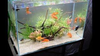 金魚水槽立ち上げ 金魚と水草  Set up a goldfish aquarium 【HD】 thumbnail