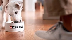 Pet Food Without Artificial Flavors or Preservatives