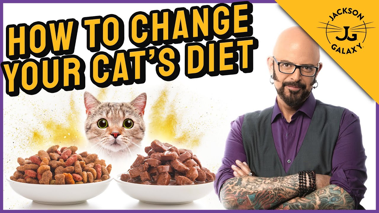 How to Transition Your Cats to a Different Diet