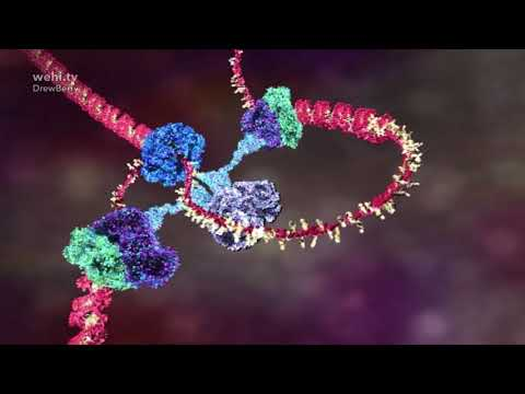 DNA Animations