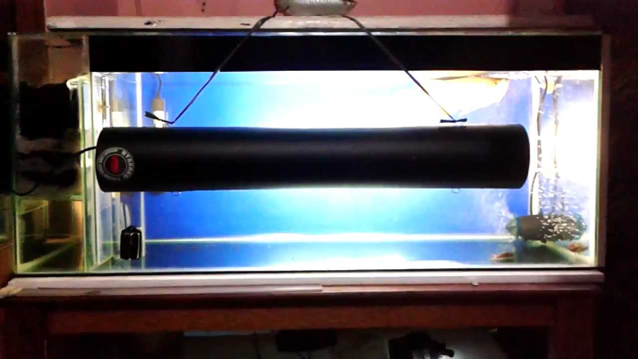 First tanning lamp arowana red tail golden - YouTube