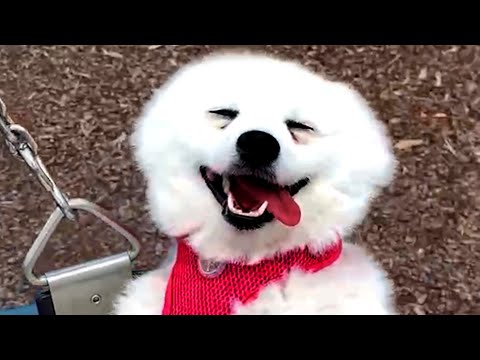 CUTE AND FUNNY DOG VIDEOS TO START 2021! 🐶