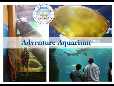 Adventure Aquarium - Camden, NJ (DITL)