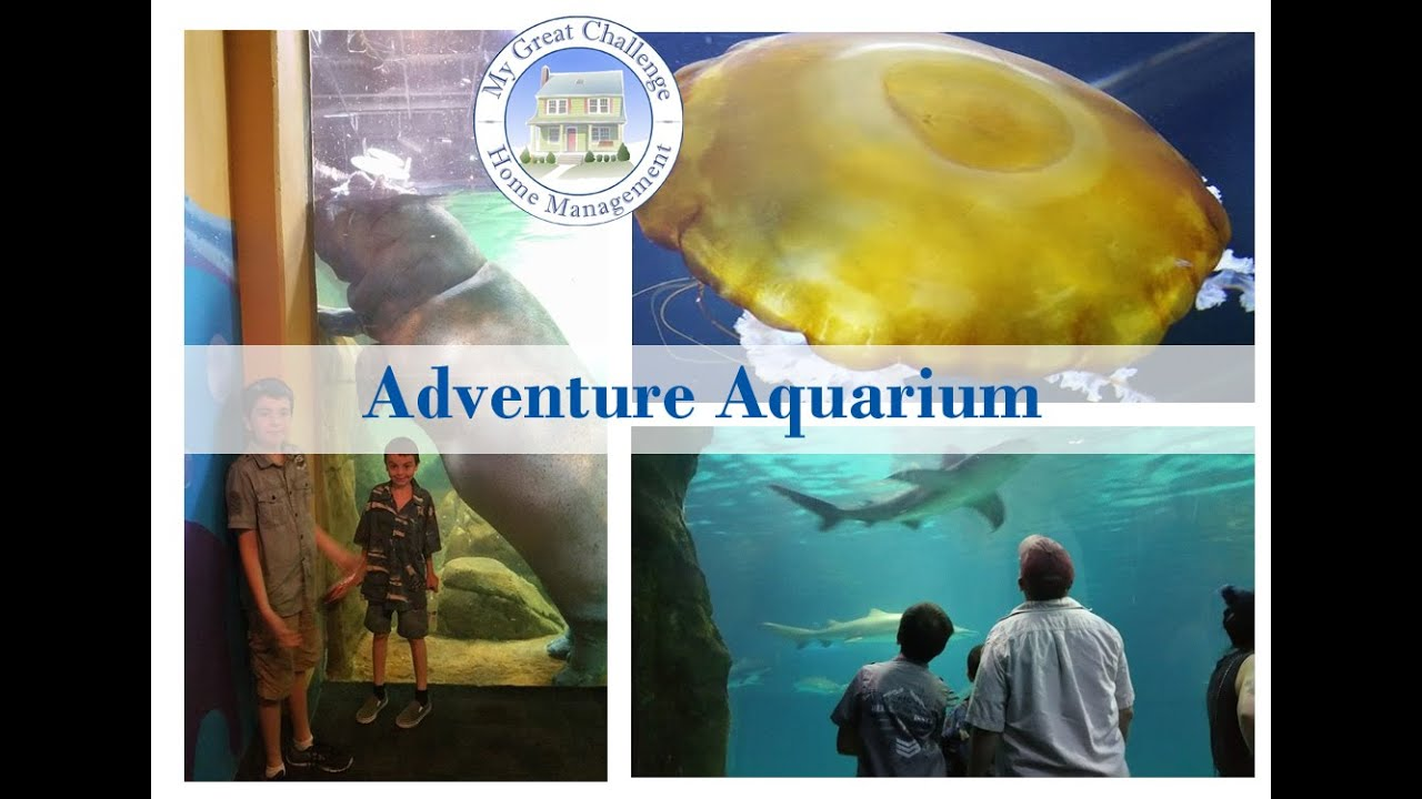 Adventure Aquarium Camden Nj Ditl Youtube