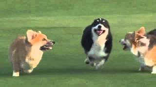 Dogs Wipe Out