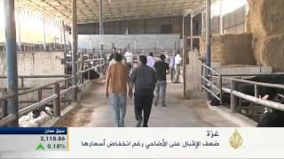 تراجع الإقبال على شراء الأضاحي في قطاع غزة