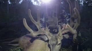 2017 Archery Buck - Utah