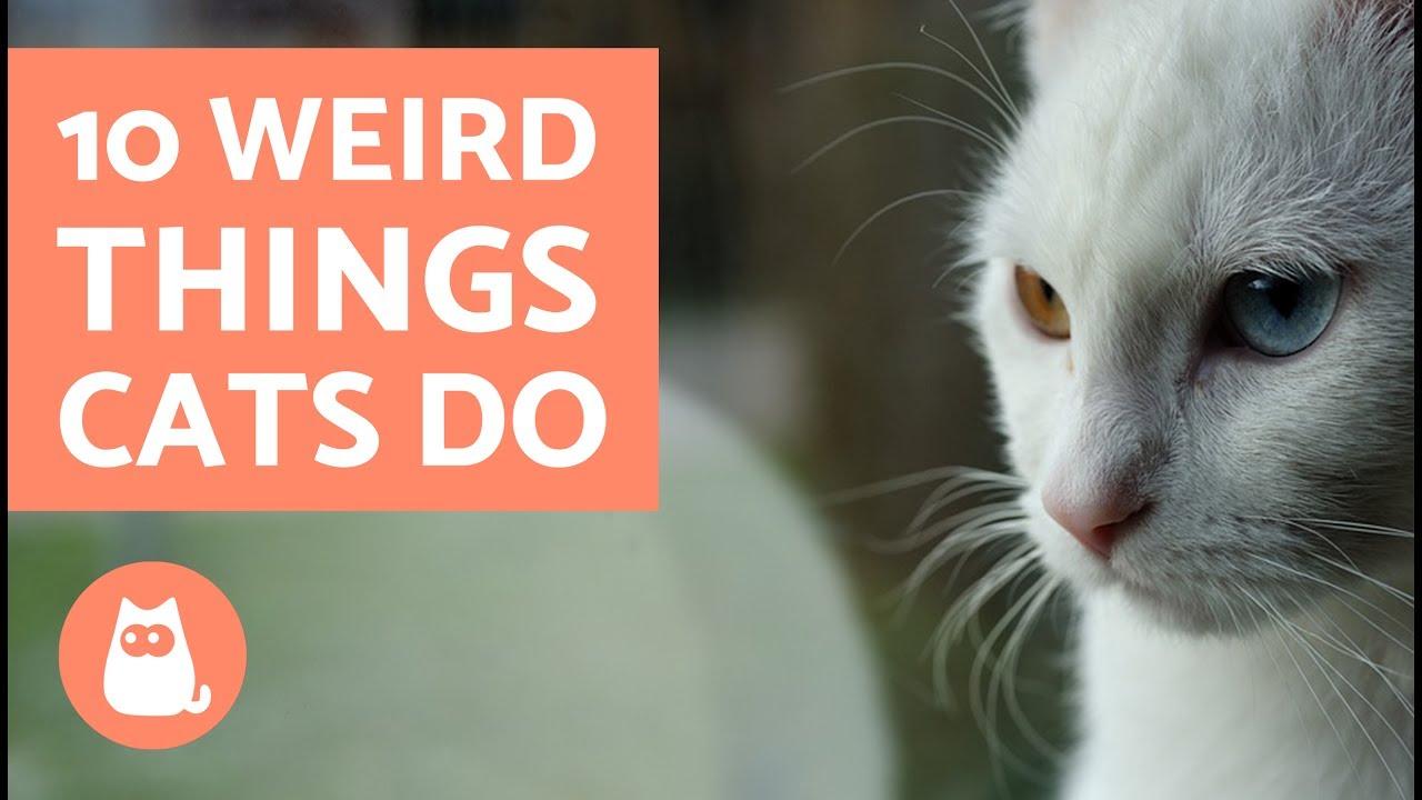 10 Weird Things Cats Do
