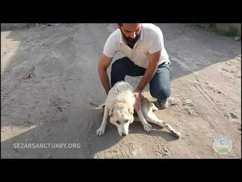 Rescuing a stray dog with broken back - Khatereh