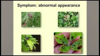 Guidelines for Diagnosing Plant Problems