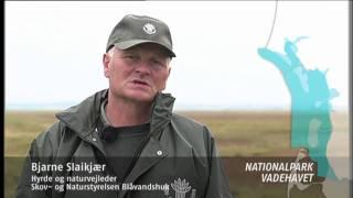 Naturstyrelsen Blåvandshuk
