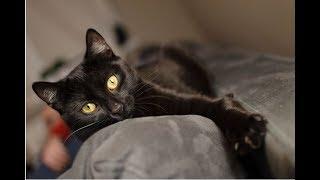 Кошка спасла хозяина, а сама не сумела… Когда начался пожар, она знала, что делать