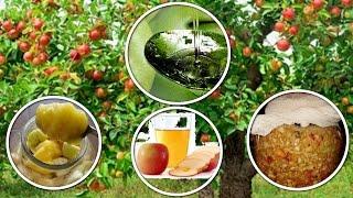 Домашний уксус. Как приготовить яблочный уксус