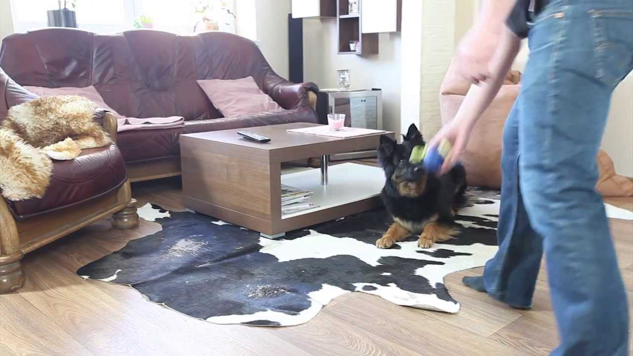 leaving dog home alone