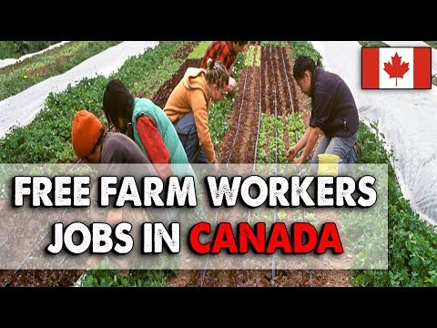 Free Farm Worker Jobs In Canada Everyone Can Apply No Qualification Needed Canada Work Permit