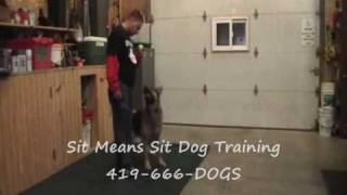 Sit Means Sit Dog Training Northwest Ohio