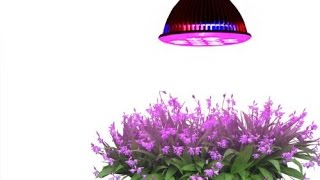 Review: Taotronics® E27 12w Led Grow Light Tt-gl20 Red Blue Led