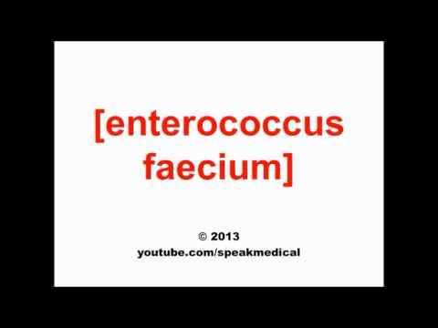 Pronounce Enterococcus faecium | SpeakMedical