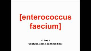 Pronounce Enterococcus faecium | SpeakMedical