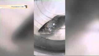 В одном из магазинов Китая ожила замороженная рыба