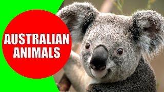 Australian animals for children, Kids learn Australian animal sounds & the wild animals in Australia