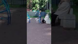 Луначарского 76 Спб детская площадка, выгул собаки,без намордника.
