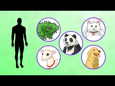 Body Parts Introduction   Human Body Parts   Pre School   Animated Videos For Kids