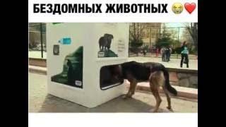 Видео Автомат, который кормит бездомных животных Видеоролики на Sibnet