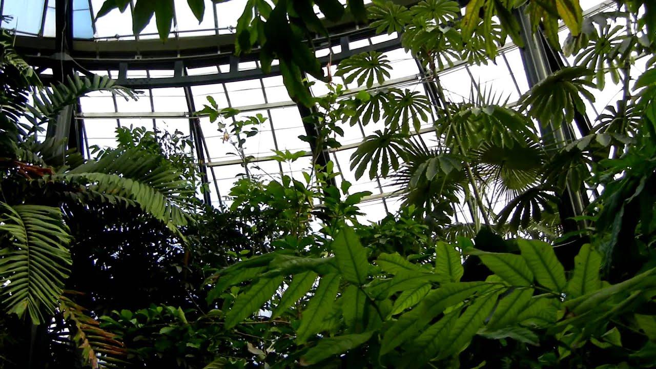 Conservatory Tropical Plant Room Pan Huntington Botanical