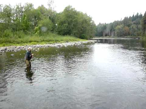 Steelhead caught on clackamas river youtube for Clackamas river fishing