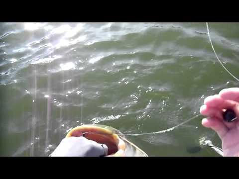 ловля сома на воронежском водохранилище