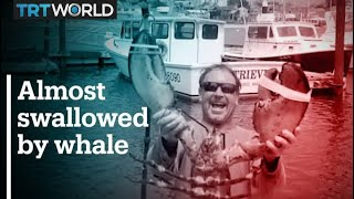 Lobster diver survives being swallowed by a whale