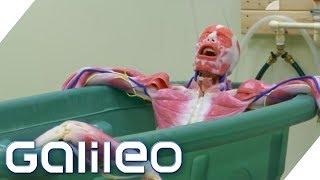 Die Körperfabrik - was steckt dahinter? | Galileo | ProSieben