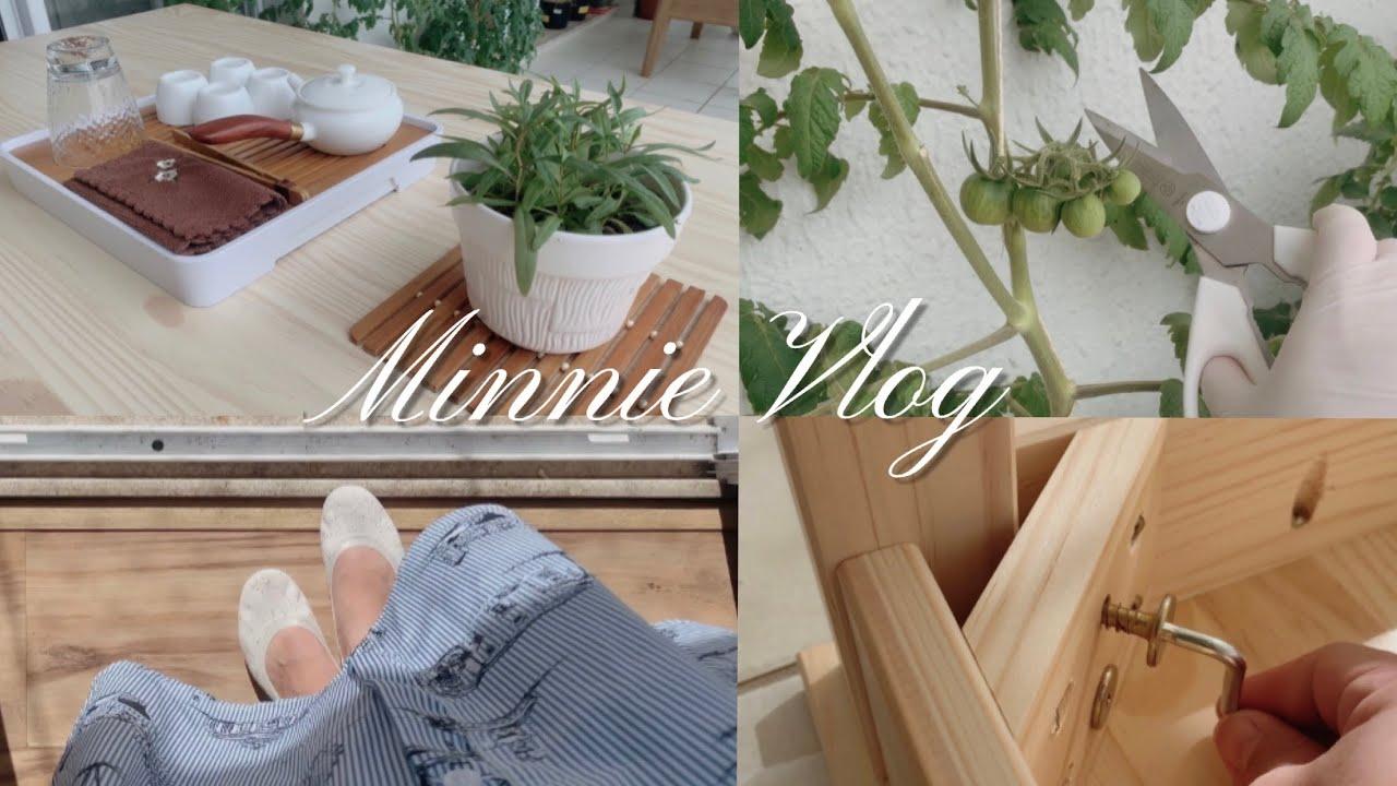 VLOG 18|我的阳台大改造(01)原木风🪑番茄修剪侧枝|莲花清瘟胶囊|爱心健康包|日常VLOG