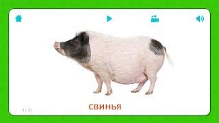 Свинья - Карточки Для Детей - Домашние Животные - Карточки Домана