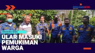 BREAKING NEWS : Ular Masuki Pemukiman Warga