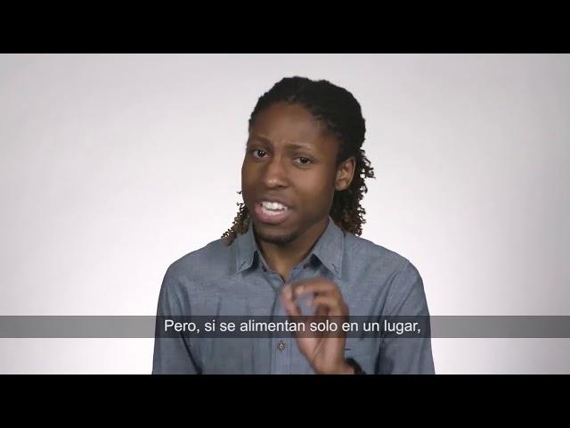 Varroa Destructor   Sammy Ramsey   Español
