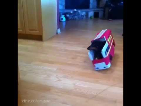 Dachshund Fire Drill Vine – Puppy Firefighters!