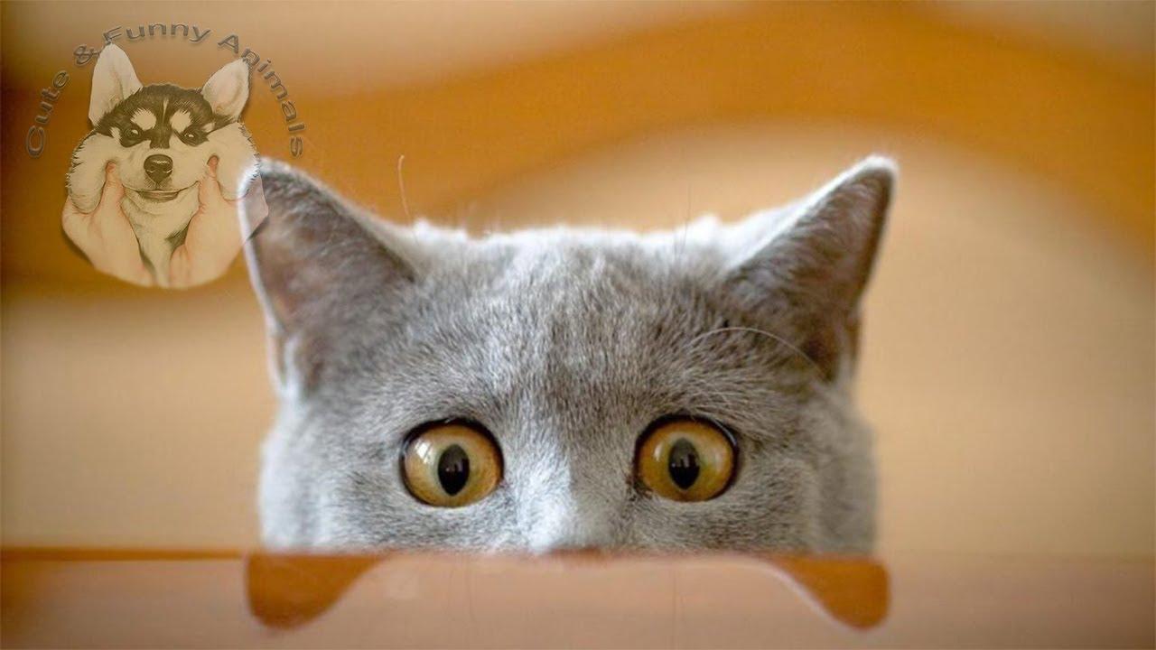 Funniest and Cutest Animals, Dog Fails Cat Fails, Funny Pets, Funny Cats, Funny Dogs, Funny video#10