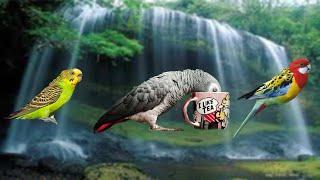 От и до: Домашние птицы