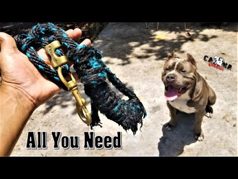 How We Build Muscle At Caona Bullys - XL American Bully Pitbull Extreme Workout