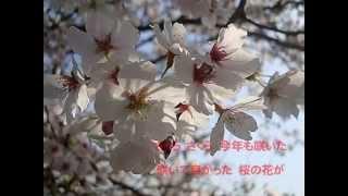 「一声一代」 のカップリング曲 です。 早く桜の季節が来るといいですね...