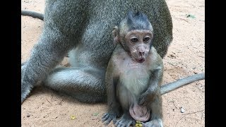 Poor baby monkey cry because not see mum