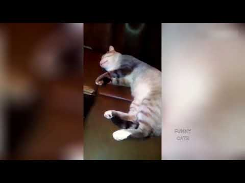 Funny Cats - Fail Compilation, Funny Pranks and Funny Videos Videos | New Video 2017